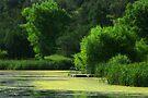 August Green ~ Lake Roberts, New Mexico USA by Vicki Pelham