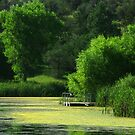 August Green ~ Lake Roberts, New Mexico USA by Vicki Pelham