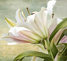 Hybrid White Lilly by Yannik Hay