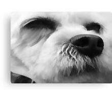 Dog's face Canvas Print