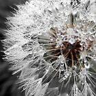Dandelions by Margaret Walker