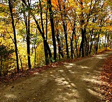 Autumn Shady Lane by NatureGreeting Cards ©ccwri