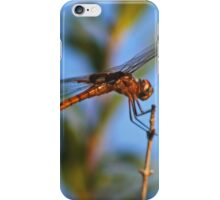 Drangonfly iPhone Case/Skin