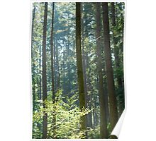 Sunny Trees Poster