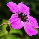 Purple Flower by ElsT