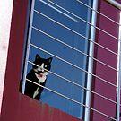 Gilbert Street Cat by sedge808