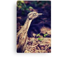 Curlew Canvas Print