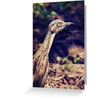 Curlew Greeting Card