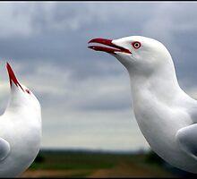 Seagulls by sedge808