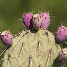 Nopalitos by Richard G Witham