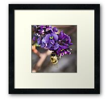 Bee Study Framed Print