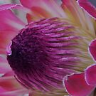 Protea by ElsT