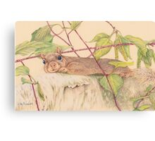 Charlie the Squirrel Canvas Print
