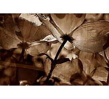 Petal Poetry Photographic Print