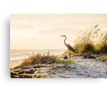 Heron of Anna Maria Part2 Canvas Print