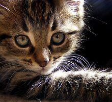 look into my eyes. by Elizabeth Rose Rawlings