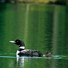 On Green Pond by Brian Pelkey