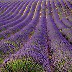 Purple lines  by annalisa bianchetti