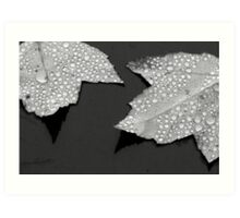 Maple leaves (after the rain) Art Print