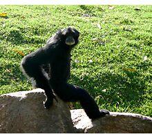 Old man monkey Photographic Print
