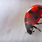 Lady Bird by Simon Marsden