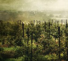 Fruition by Nikki Smith