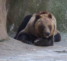 Kodiak Bear by Michele Markley