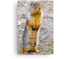 Wild squirrel... ??  Canvas Print