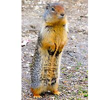 Wild squirrel... ??  Photographic Print