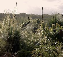 Grass Trees, Wattle & Banksia by KarenEaton