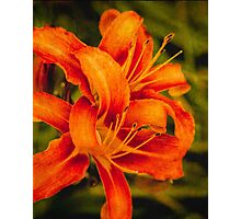 Late afternoon lilies Photographic Print