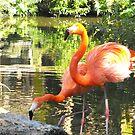 flamingos in Florida by IrisGelbart