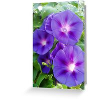 Glow of the Morning Glories Greeting Card