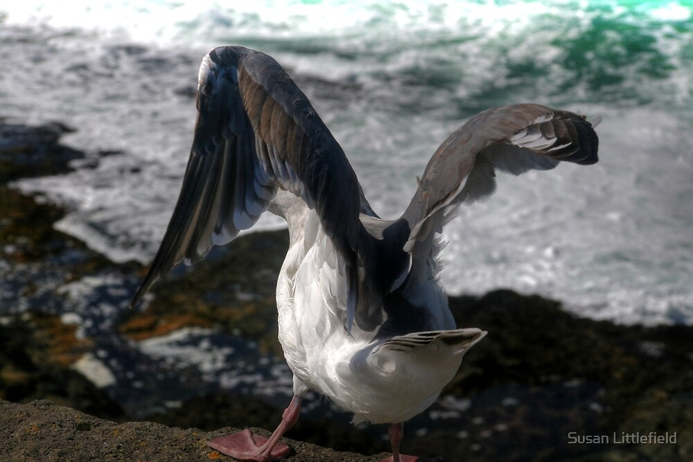 Gull by Susan Littlefield