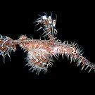 Ghostpipefish - Philippines by PatrickNeumann