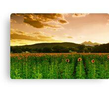 A Rural Sunflower Sky Canvas Print