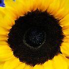 Sunflower by aruni