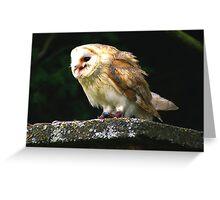 Barn Owl -4 Greeting Card