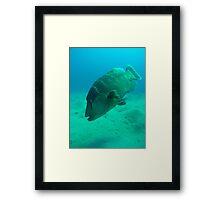 Giant Trigger Fish Framed Print