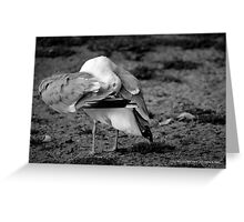 Larus Argentatus - Herring Gull's Cleaning Time | Center Moriches, New York  Greeting Card