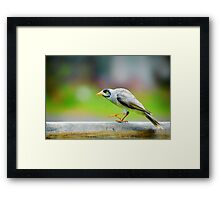 Sneaking Up.... Framed Print