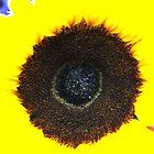 Sunflower deux by aruni