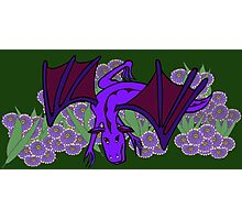 Purple Dragon at play Photographic Print