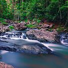 Guanaba Creek by Tracie Louise