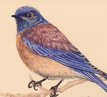Bluebird by lisamariestudio