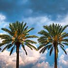 palm trees by John Chandler