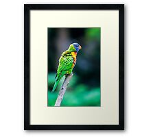 Fluffy.... Framed Print