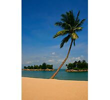 Tropical Palm on the Beach Photographic Print