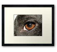 The brown eye. Framed Print