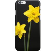 Daffodils in full bloom iPhone Case/Skin